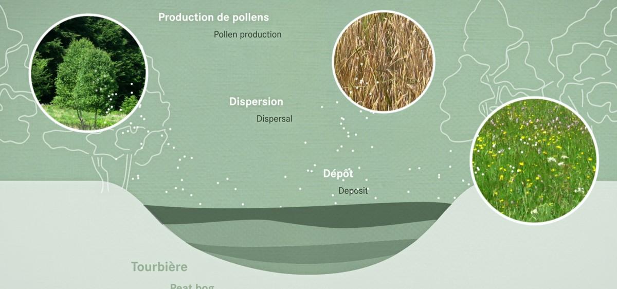 Borne multimedia : les pollens