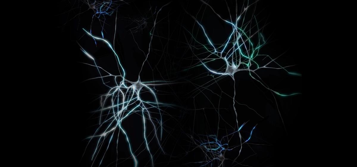 Vitrine tactile animée sur le cerveau