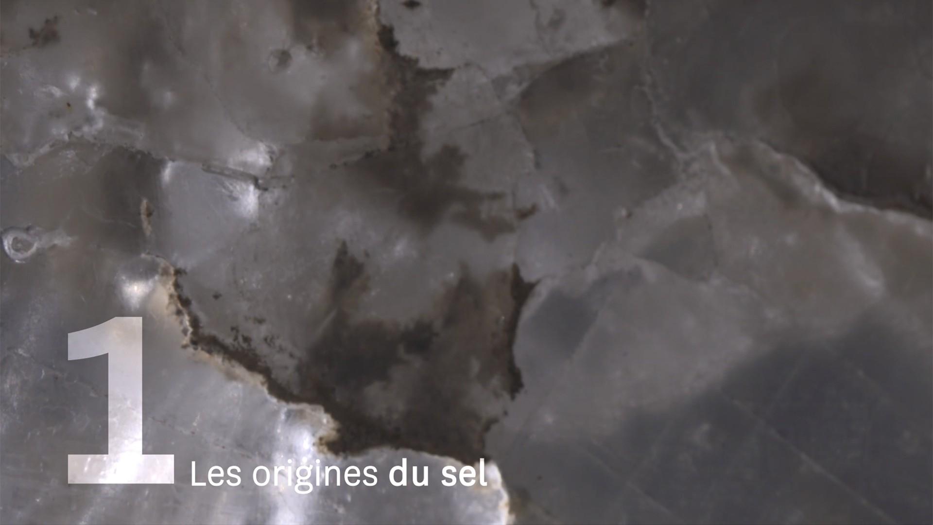 Saline Royale - Animation - Reportage - Drôle de trame